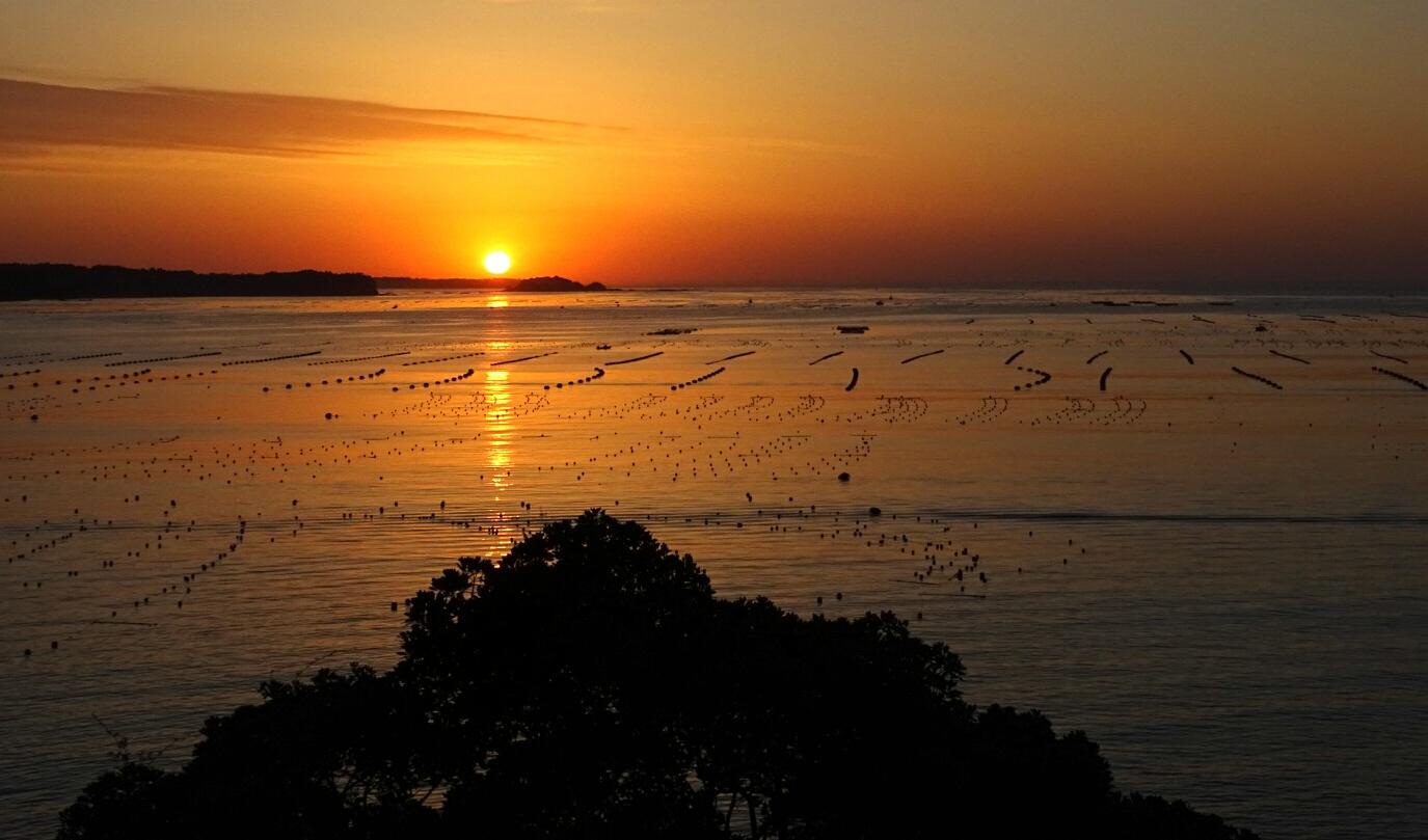 志津川湾の朝焼け